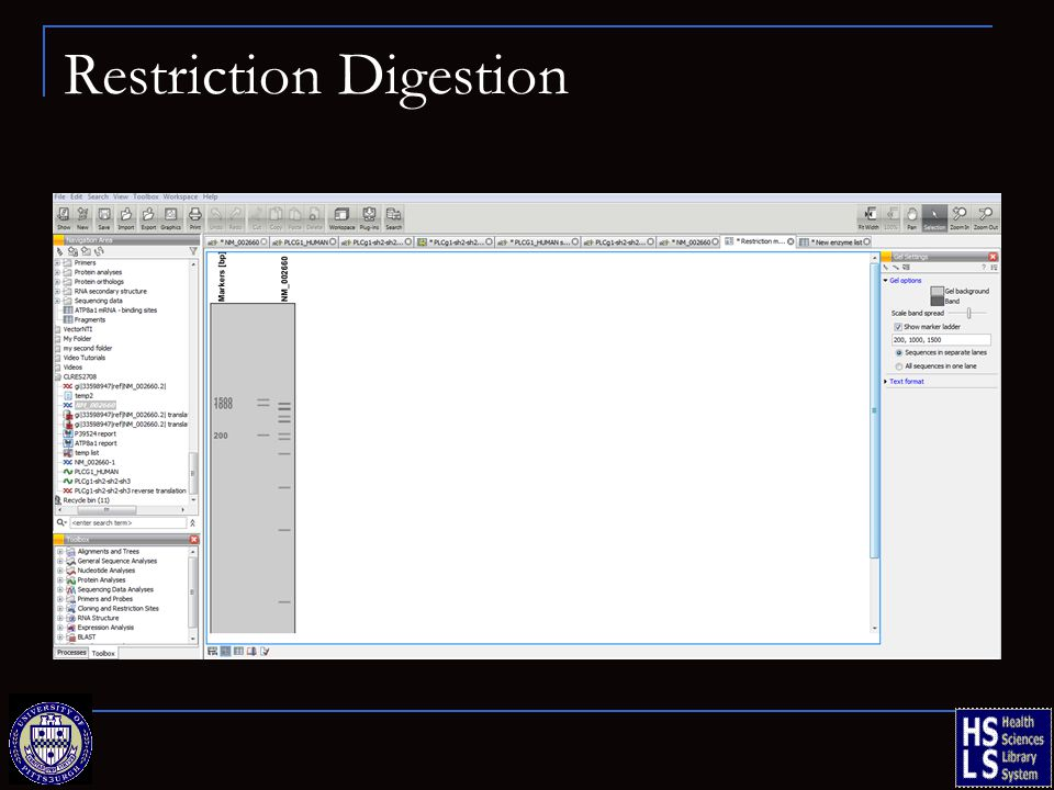 Restriction Digestion