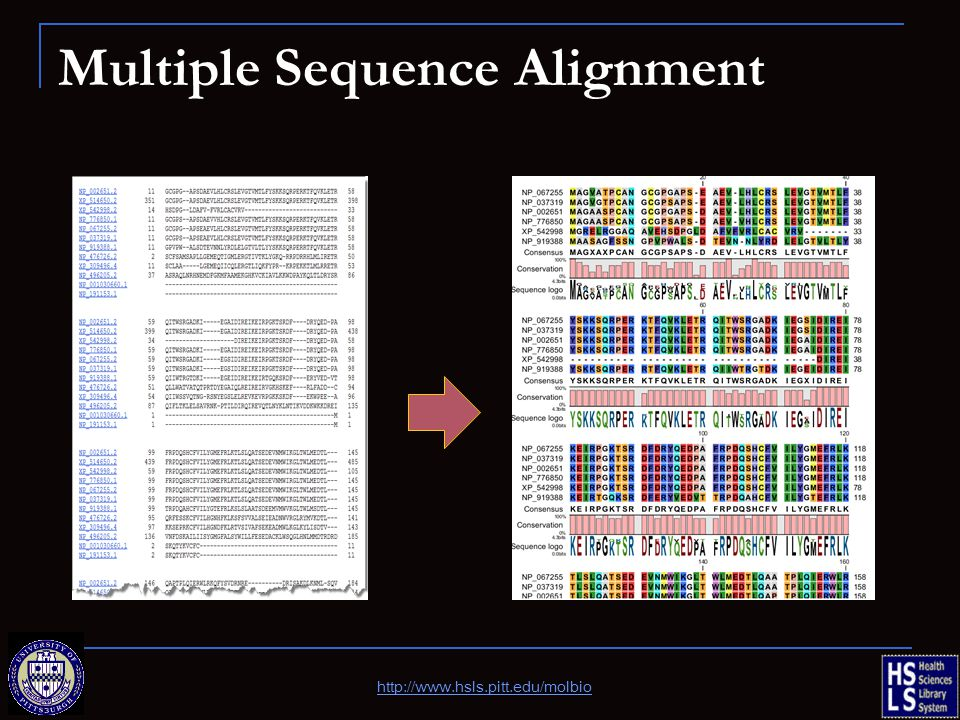 Multiple Sequence Alignment http://www.hsls.pitt.edu/molbio