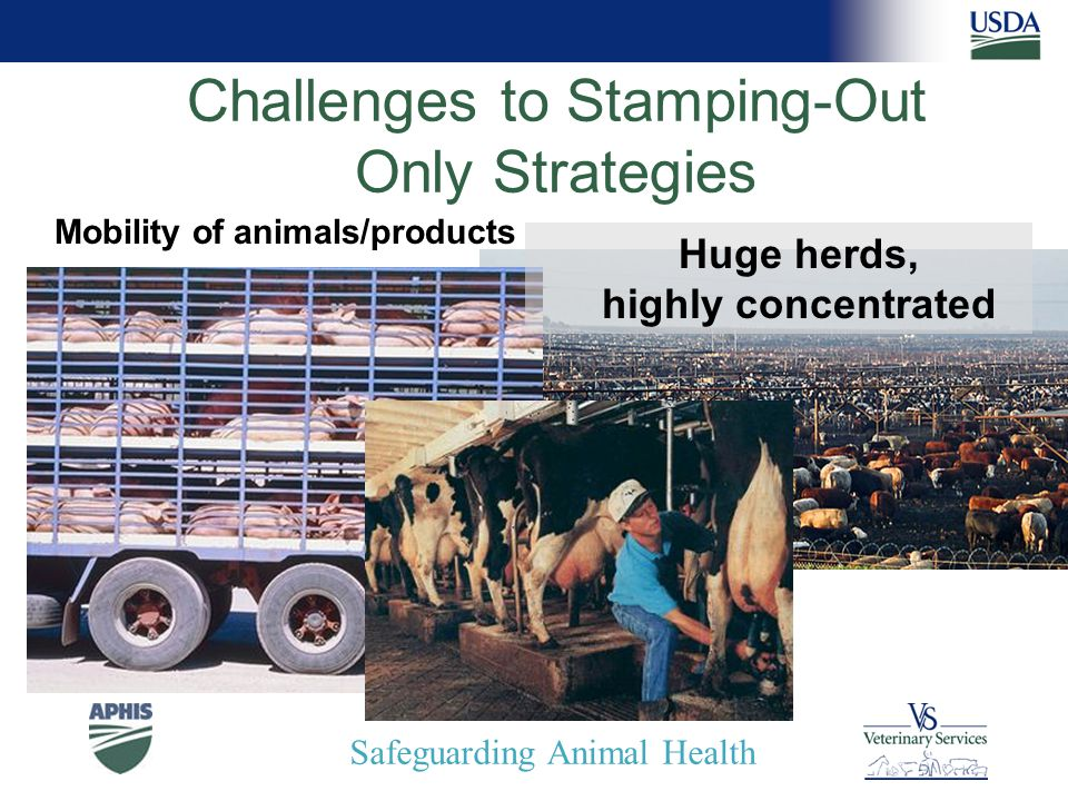 Safeguarding Animal Health Challenges to Stamping-Out Only Strategies Huge herds, highly concentrated Mobility of animals/products