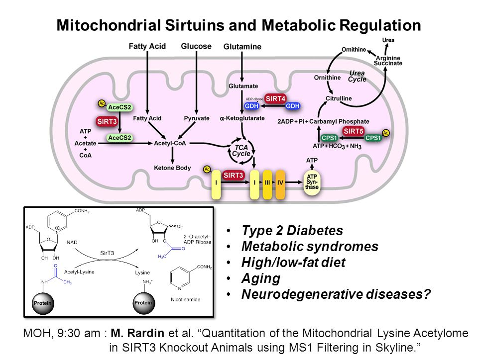 Mitochondrial Sirtuins and Metabolic Regulation Type 2 Diabetes Metabolic syndromes High/low-fat diet Aging Neurodegenerative diseases.
