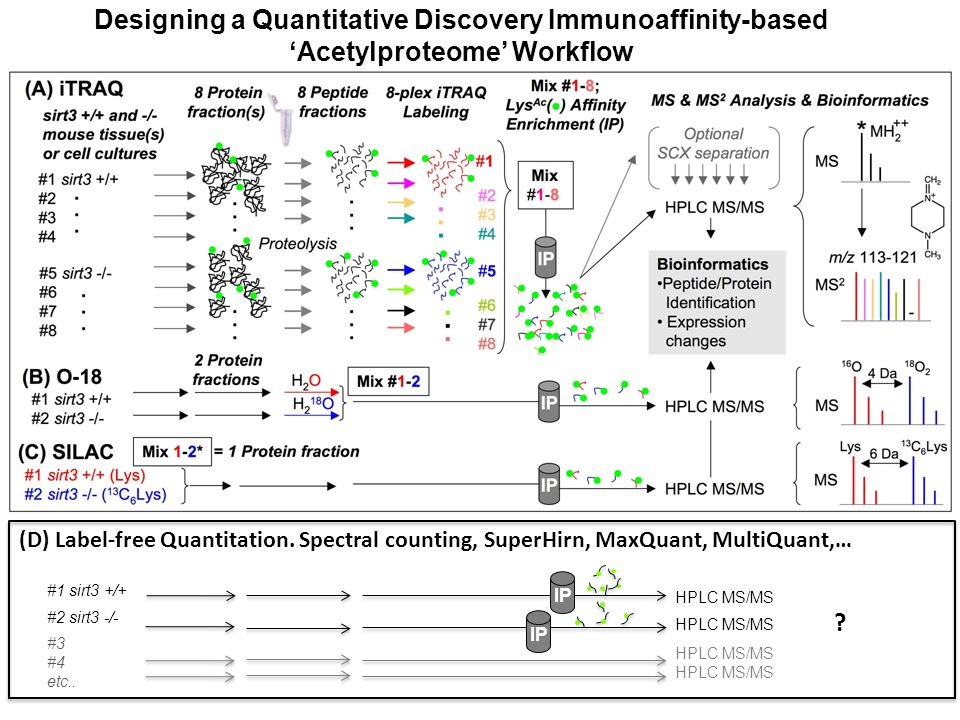 Designing a Quantitative Discovery Immunoaffinity-based 'Acetylproteome' Workflow (D) Label-free Quantitation.