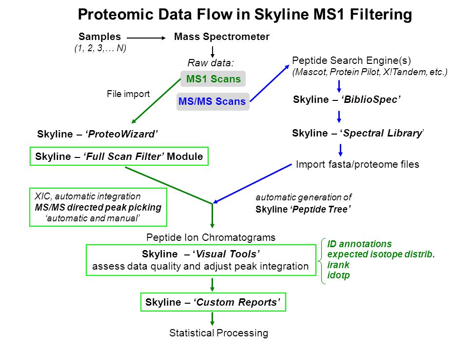 Samples (1, 2, 3,… N) Mass Spectrometer Raw data: MS1 Scans MS/MS Scans Skyline – 'BiblioSpec' Skyline – 'Spectral Library' automatic generation of Skyline 'Peptide Tree ' Skyline – 'ProteoWizard' Skyline – 'Full Scan Filter' Module File import Import fasta/proteome files Peptide Ion Chromatograms XIC, automatic integration MS/MS directed peak picking 'automatic and manual' Skyline – 'Visual Tools' assess data quality and adjust peak integration Skyline – 'Custom Reports' Statistical Processing Peptide Search Engine(s) (Mascot, Protein Pilot, X!Tandem, etc.) ID annotations expected isotope distrib.