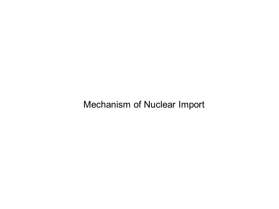 Mechanism of Nuclear Import