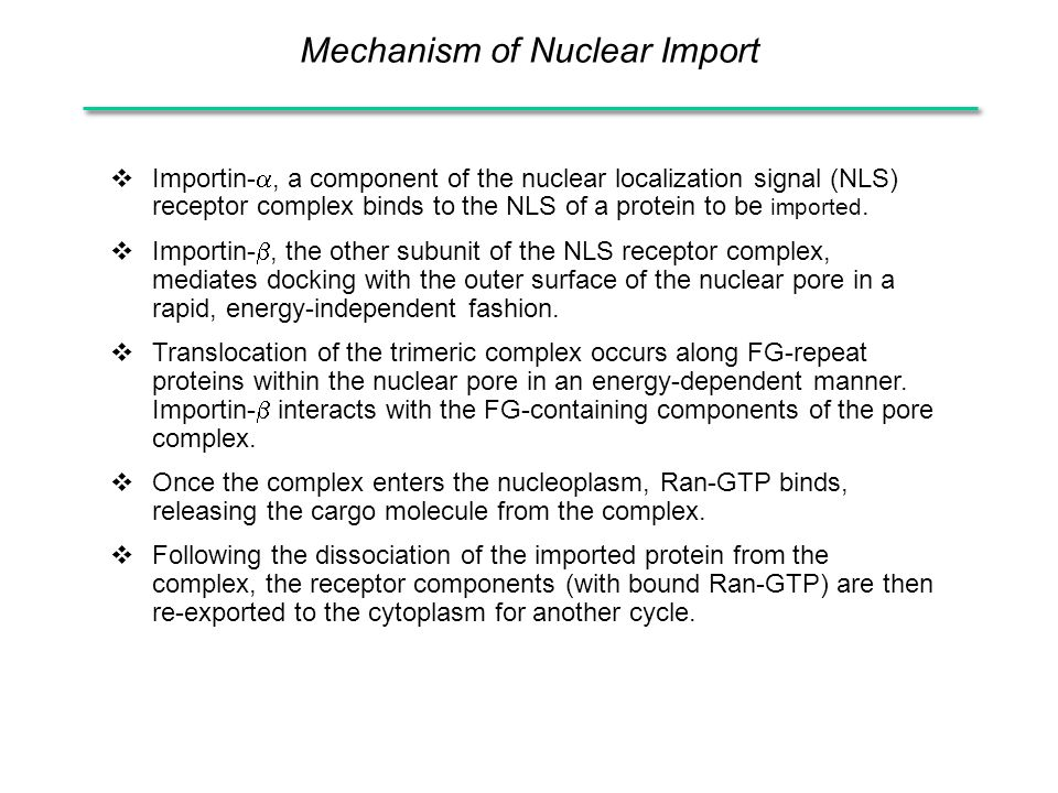 Mechanism of Nuclear Import  Importin- , a component of the nuclear localization signal (NLS) receptor complex binds to the NLS of a protein to be imported.