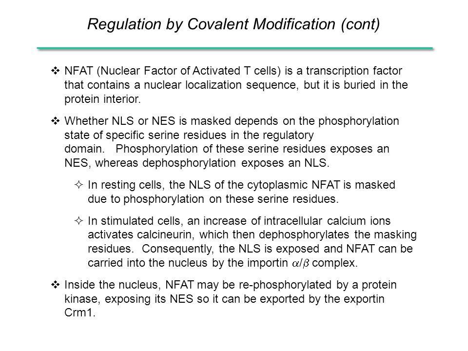  NFAT (Nuclear Factor of Activated T cells) is a transcription factor that contains a nuclear localization sequence, but it is buried in the protein interior.