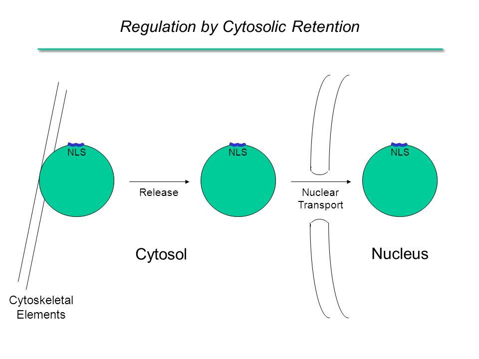 Regulation by Cytosolic Retention Release NLS Nucleus Cytosol Nuclear Transport Cytoskeletal Elements