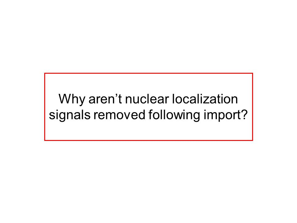 Why aren't nuclear localization signals removed following import?