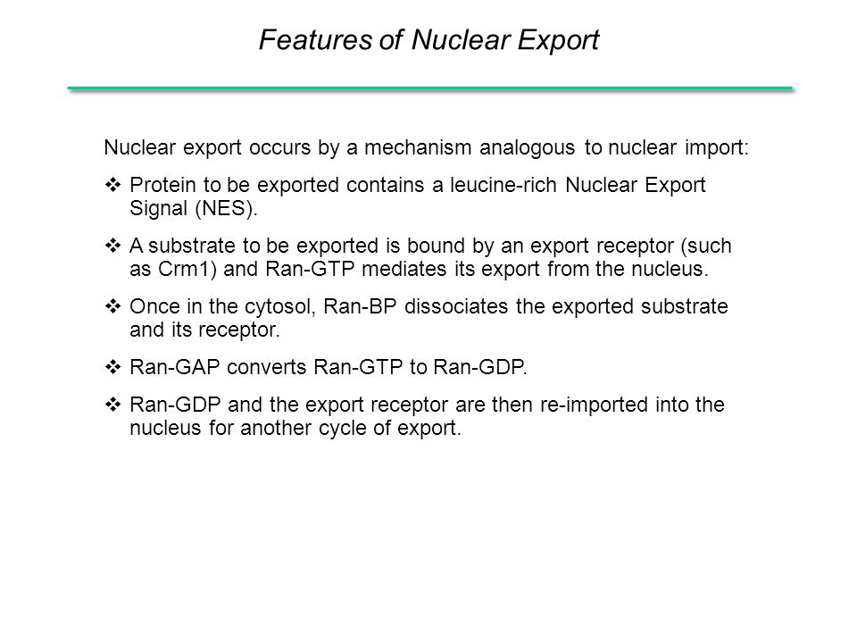 Features of Nuclear Export Nuclear export occurs by a mechanism analogous to nuclear import:  Protein to be exported contains a leucine-rich Nuclear Export Signal (NES).