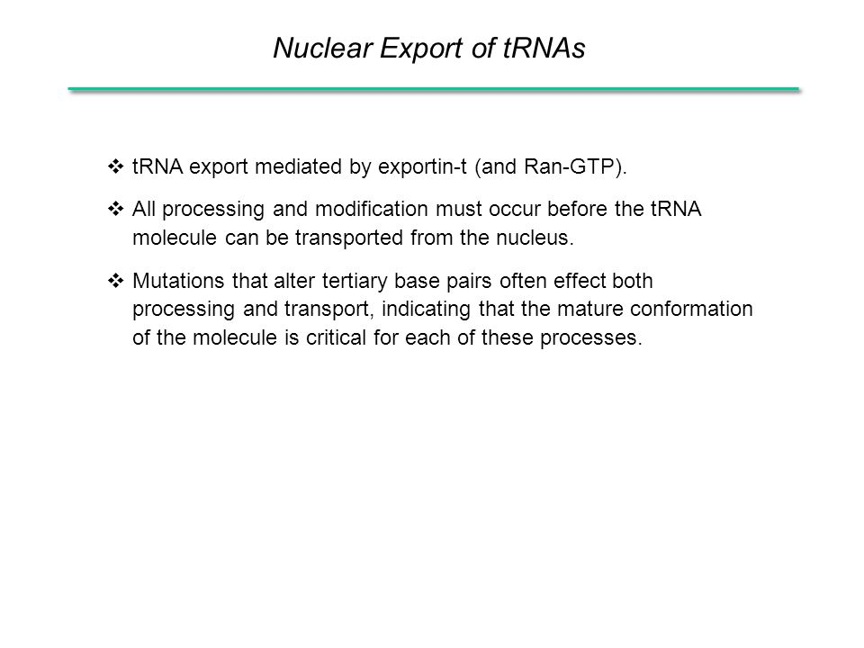 Nuclear Export of tRNAs  tRNA export mediated by exportin-t (and Ran-GTP).