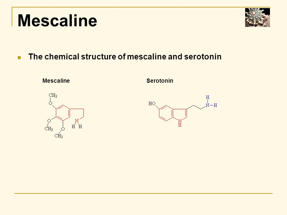 Mescaline The chemical structure of mescaline and serotonin MescalineSerotonin