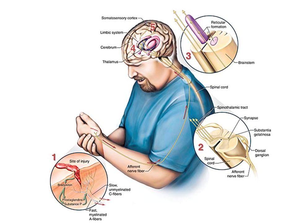 Undertreatment of cancer pain - an international problem Japani: 75 % Okayama -04 Hollanti: 65 % Enting -07 Saksa: 61 % Felleiter -05 Italia: 10-55 % Apolone -09 Kanada: 40-48 % Krou-Mauro -09