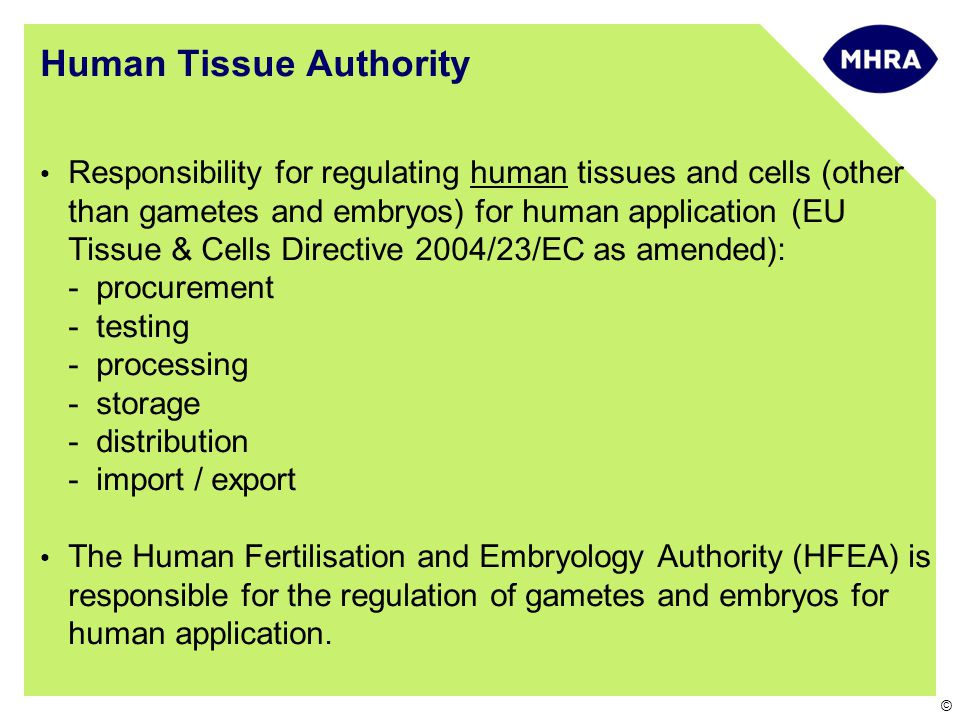 © Human Tissue Authority Responsibility for regulating human tissues and cells (other than gametes and embryos) for human application (EU Tissue & Cells Directive 2004/23/EC as amended): -procurement -testing -processing -storage -distribution -import / export The Human Fertilisation and Embryology Authority (HFEA) is responsible for the regulation of gametes and embryos for human application.