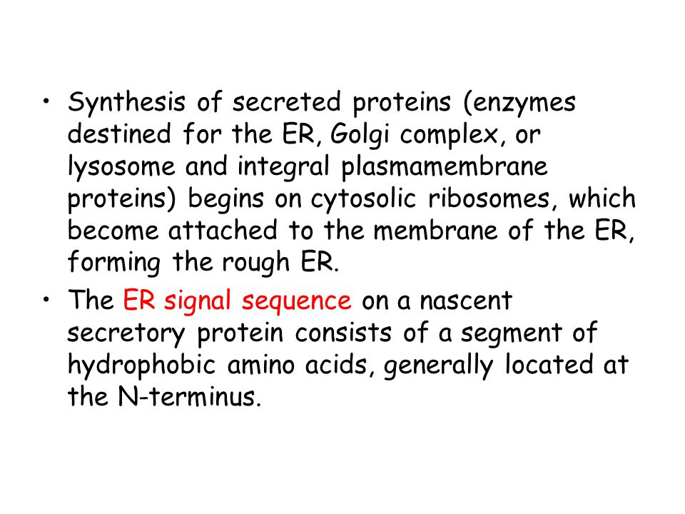 Synthesis of secreted proteins (enzymes destined for the ER, Golgi complex, or lysosome and integral plasmamembrane proteins) begins on cytosolic ribosomes, which become attached to the membrane of the ER, forming the rough ER.