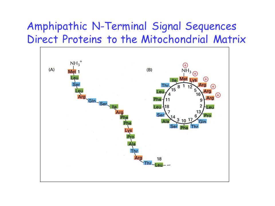 Amphipathic N-Terminal Signal Sequences Direct Proteins to the Mitochondrial Matrix