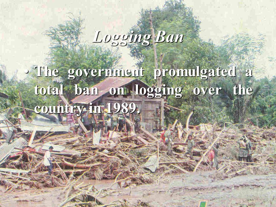 Logging Ban The government promulgated a total ban on logging over the country in 1989.The government promulgated a total ban on logging over the country in 1989.