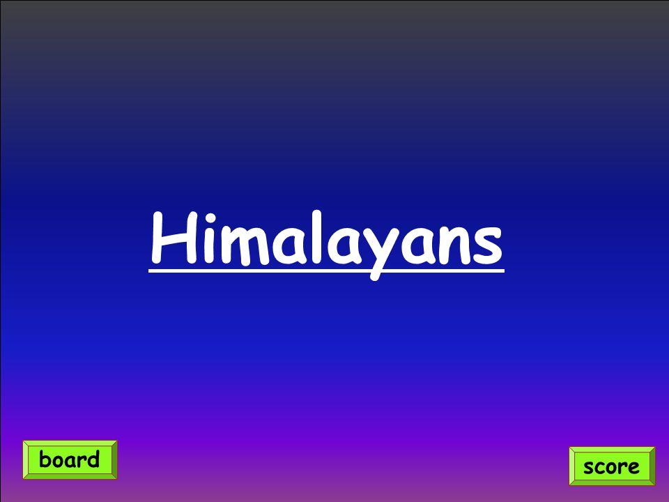 Himalayans score board