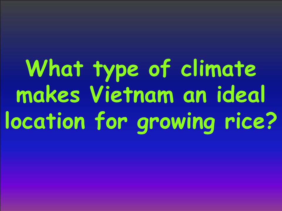 What type of climate makes Vietnam an ideal location for growing rice