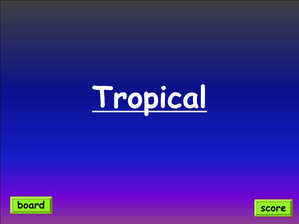 Tropical score board