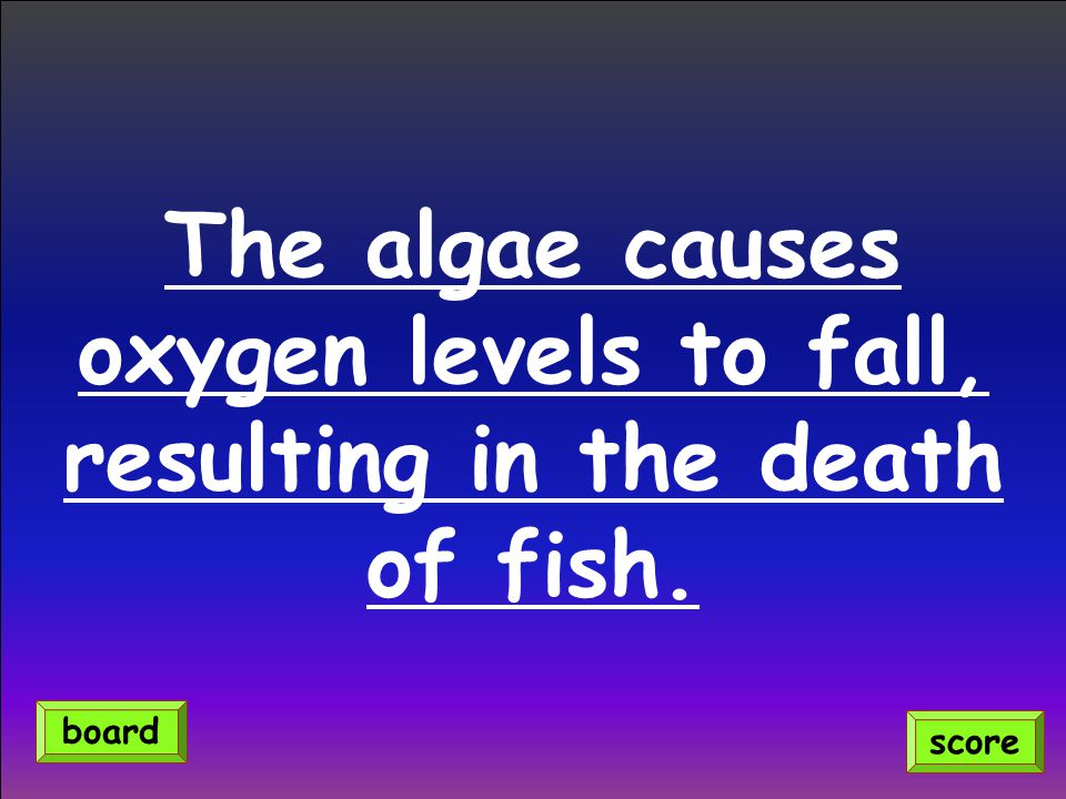 The algae causes oxygen levels to fall, resulting in the death of fish. score board