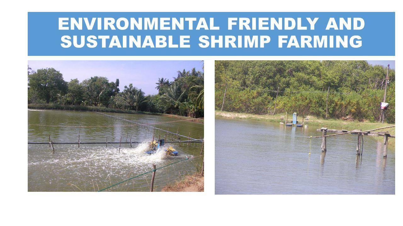 ENVIRONMENTAL FRIENDLY AND SUSTAINABLE SHRIMP FARMING