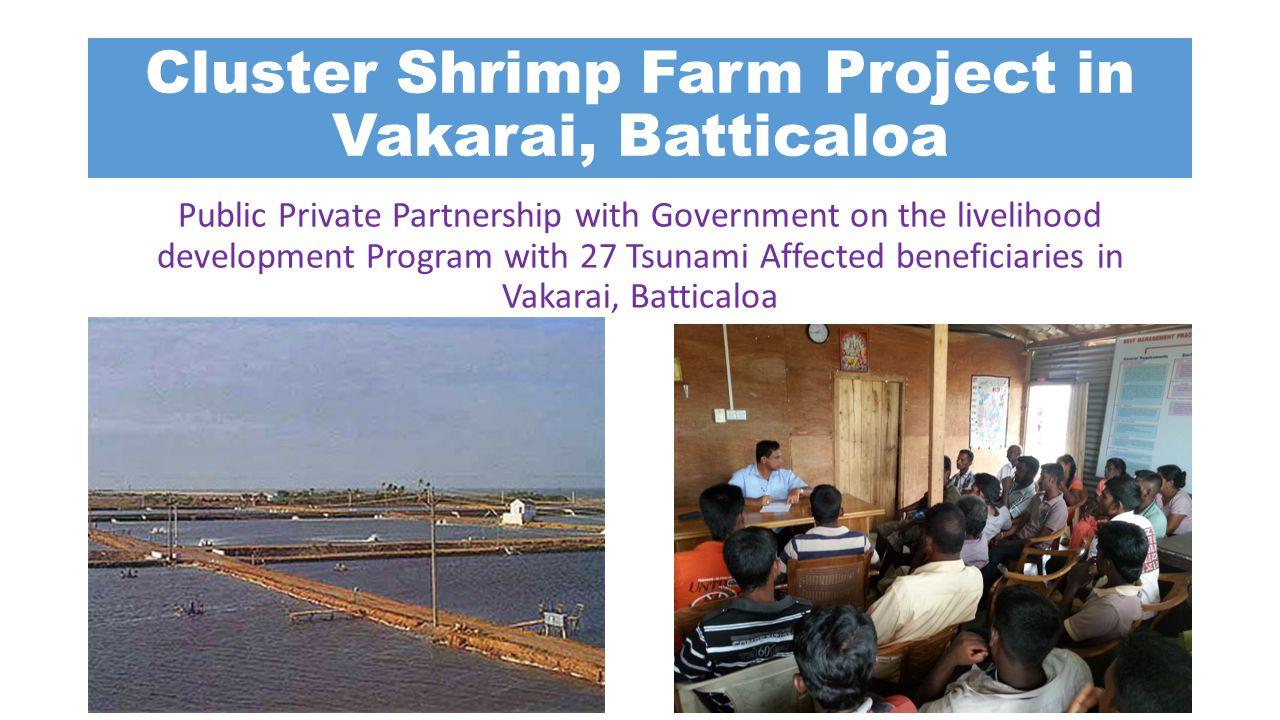 Cluster Shrimp Farm Project in Vakarai, Batticaloa Public Private Partnership with Government on the livelihood development Program with 27 Tsunami Af