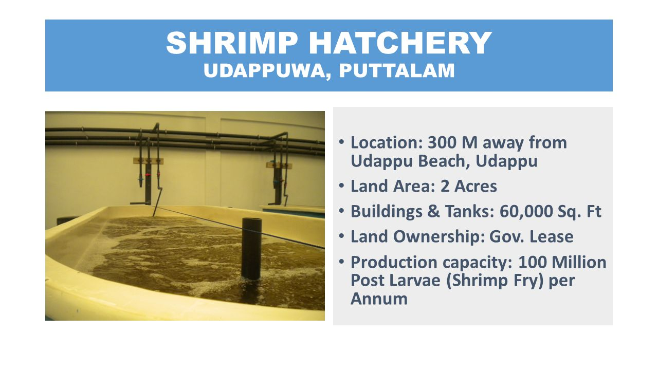 SHRIMP HATCHERY UDAPPUWA, PUTTALAM Location: 300 M away from Udappu Beach, Udappu Land Area: 2 Acres Buildings & Tanks: 60,000 Sq. Ft Land Ownership: