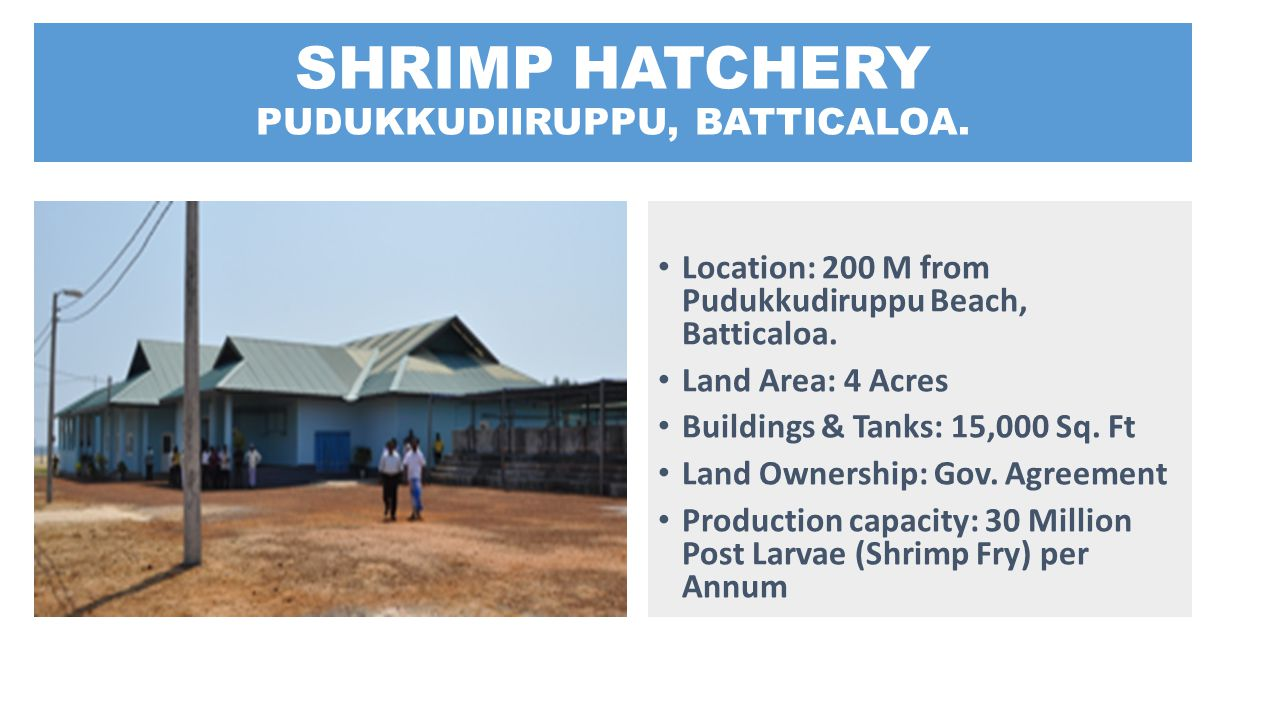 SHRIMP HATCHERY PUDUKKUDIIRUPPU, BATTICALOA. Location: 200 M from Pudukkudiruppu Beach, Batticaloa. Land Area: 4 Acres Buildings & Tanks: 15,000 Sq. F