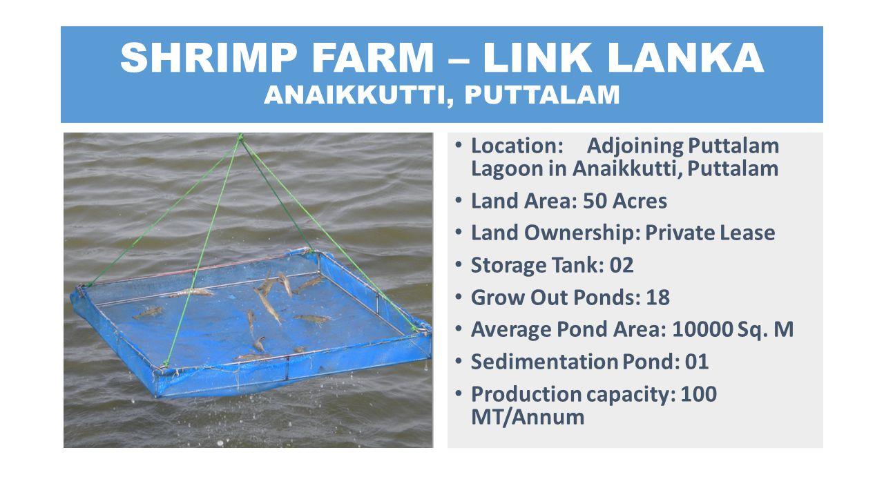 SHRIMP FARM – LINK LANKA ANAIKKUTTI, PUTTALAM Location: Adjoining Puttalam Lagoon in Anaikkutti, Puttalam Land Area: 50 Acres Land Ownership: Private