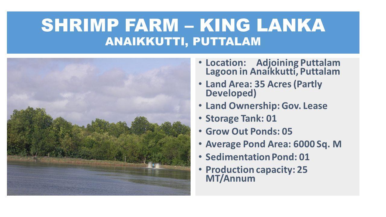 SHRIMP FARM – KING LANKA ANAIKKUTTI, PUTTALAM Location: Adjoining Puttalam Lagoon in Anaikkutti, Puttalam Land Area: 35 Acres (Partly Developed) Land