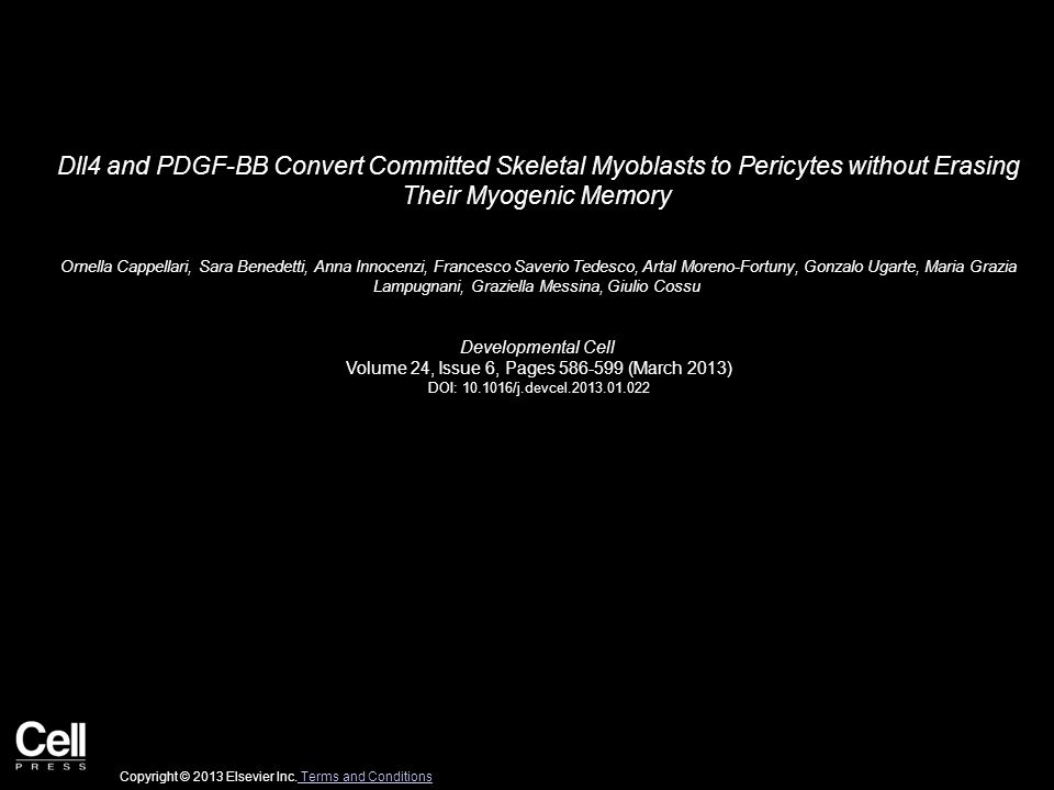Dll4 and PDGF-BB Convert Committed Skeletal Myoblasts to Pericytes without Erasing Their Myogenic Memory Ornella Cappellari, Sara Benedetti, Anna Innocenzi, Francesco Saverio Tedesco, Artal Moreno-Fortuny, Gonzalo Ugarte, Maria Grazia Lampugnani, Graziella Messina, Giulio Cossu Developmental Cell Volume 24, Issue 6, Pages 586-599 (March 2013) DOI: 10.1016/j.devcel.2013.01.022 Copyright © 2013 Elsevier Inc.