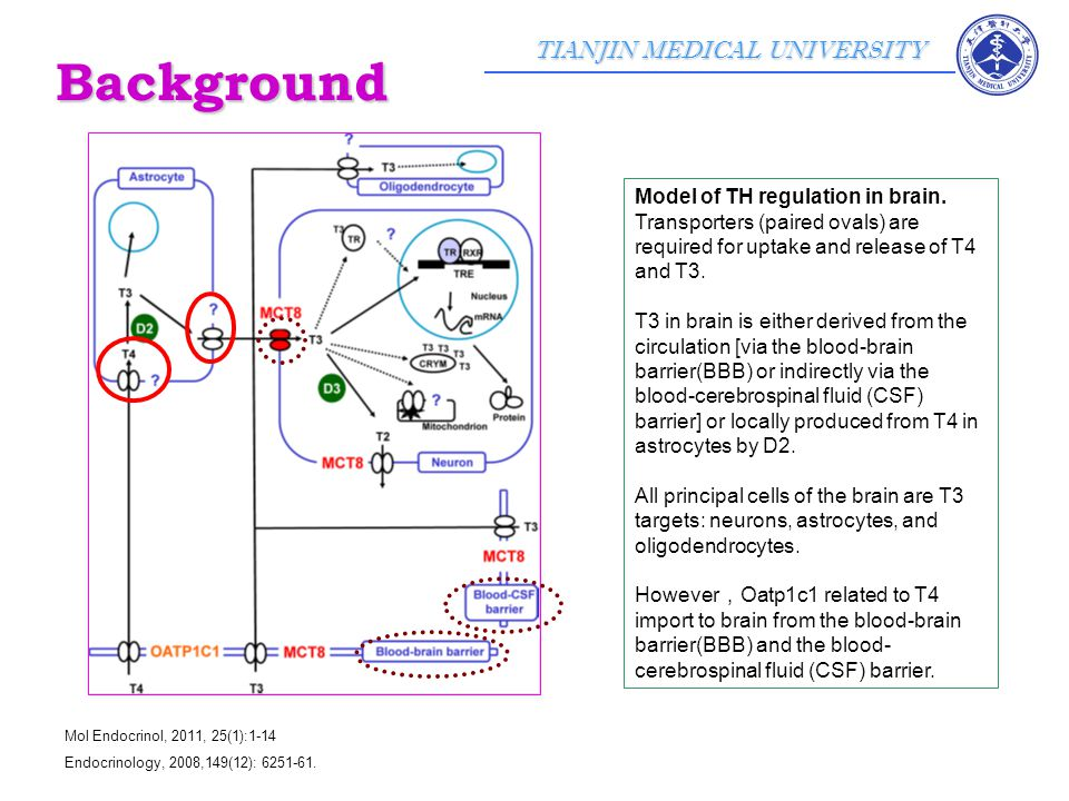 TIANJIN MEDICAL UNIVERSITY J Clin Endocrinol Metab, June 2011, 96(6):E967–E971 Oatp1c1 immunoreactivity was present in glial cells throughout the hypothalamus.