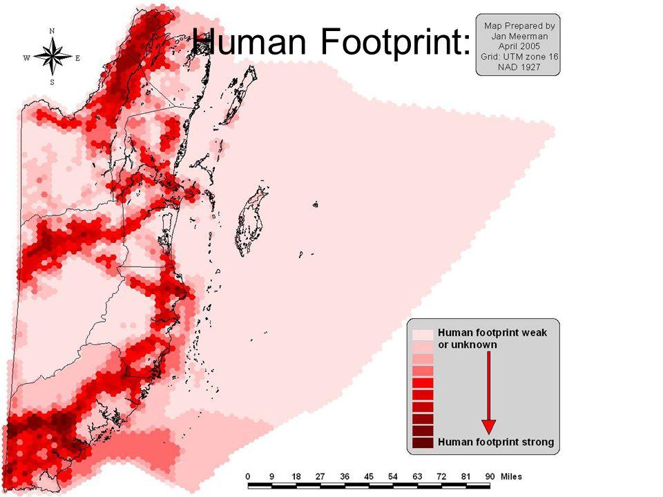 Human Footprint: