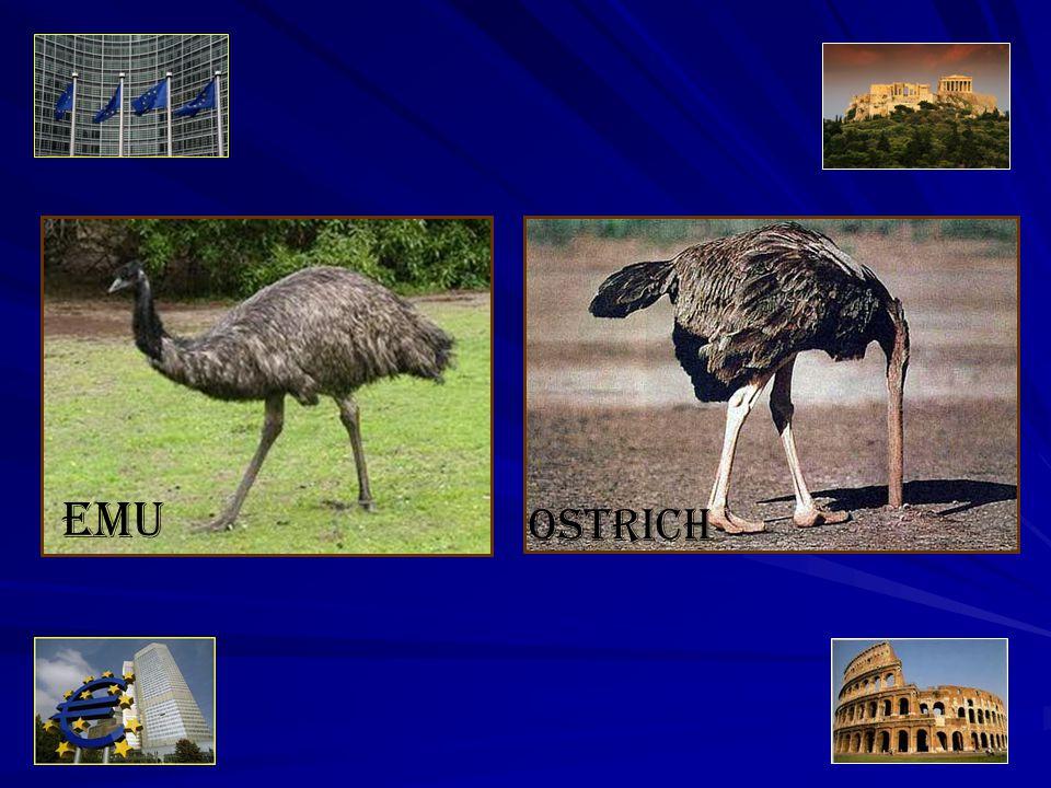 19 EMU Ostrich
