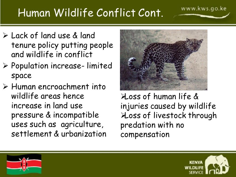 Human Wildlife Conflict Cont.  Lack of land use & land tenure policy putting people and wildlife in conflict  Population increase- limited space  H
