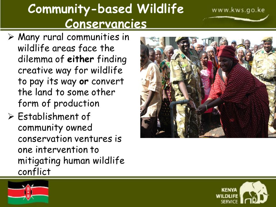 Community-based Wildlife Conservancies  Many rural communities in wildlife areas face the dilemma of either finding creative way for wildlife to pay its way or convert the land to some other form of production  Establishment of community owned conservation ventures is one intervention to mitigating human wildlife conflict