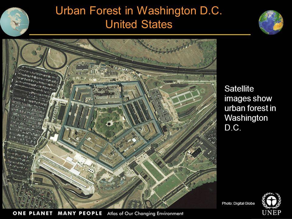 Satellite images show urban forest in Washington D.C. Pentagon, 2002Photo: Digital Globe Urban Forest in Washington D.C. United States Photo: Digital