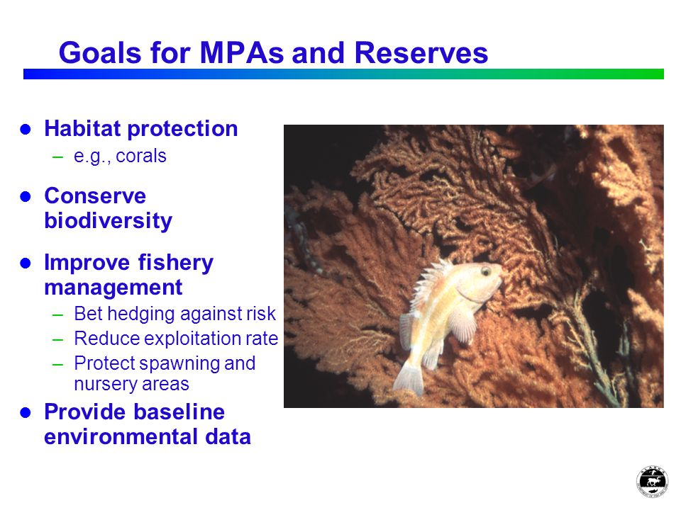 Goals for MPAs and Reserves Habitat protection –e.g., corals Conserve biodiversity Improve fishery management –Bet hedging against risk –Reduce exploitation rate –Protect spawning and nursery areas Provide baseline environmental data