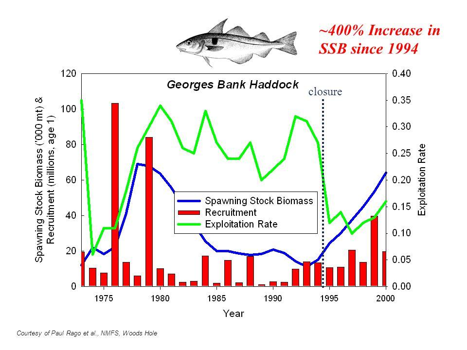 ~400% Increase in SSB since 1994 closure Courtesy of Paul Rago et al., NMFS, Woods Hole