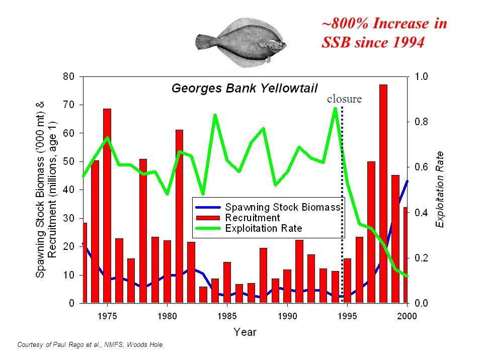 ~800% Increase in SSB since 1994 closure Courtesy of Paul Rago et al., NMFS, Woods Hole