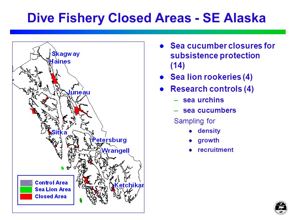 Dive Fishery Closed Areas - SE Alaska Sea cucumber closures for subsistence protection (14) Sea lion rookeries (4) Research controls (4) –sea urchins –sea cucumbers Sampling for density growth recruitment