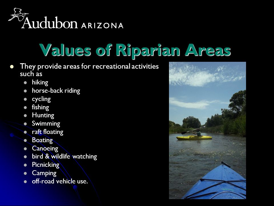 Values of Riparian Areas They provide areas for recreational activities such as hiking horse-back riding cycling fishing Hunting Swimming raft floating Boating Canoeing bird & wildlife watching Picnicking Camping off-road vehicle use.