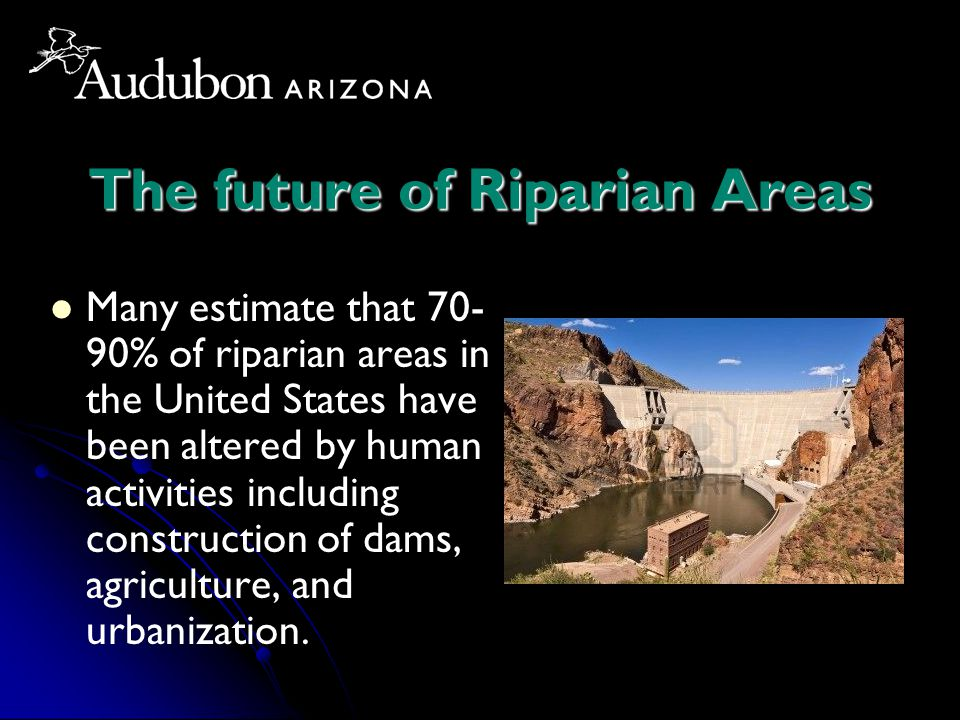 The future of Riparian Areas Many estimate that 70- 90% of riparian areas in the United States have been altered by human activities including constru