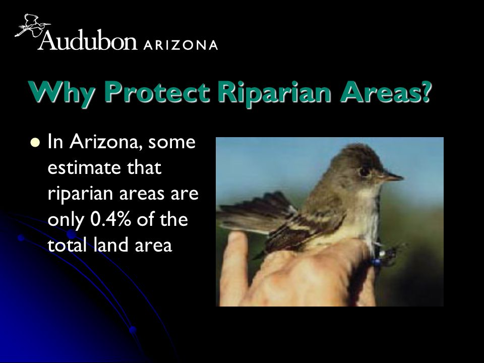 Why Protect Riparian Areas? In Arizona, some estimate that riparian areas are only 0.4% of the total land area