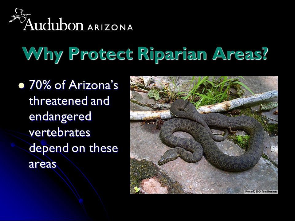 Why Protect Riparian Areas.