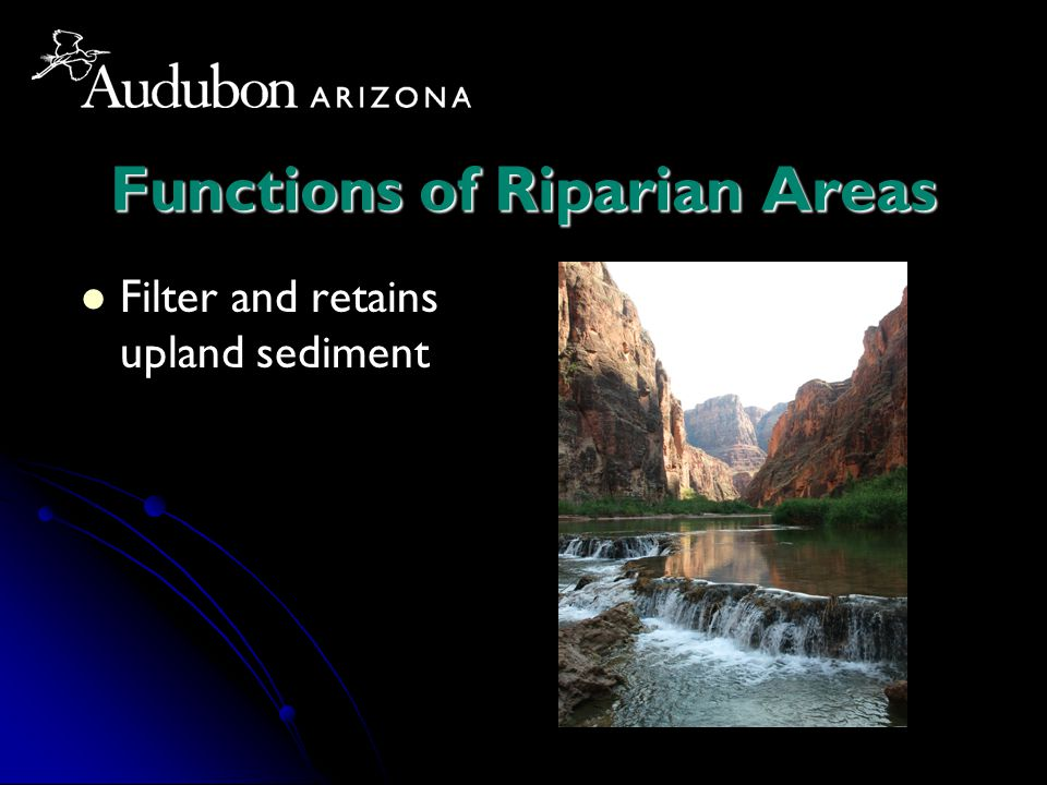 Functions of Riparian Areas Filter and retains upland sediment