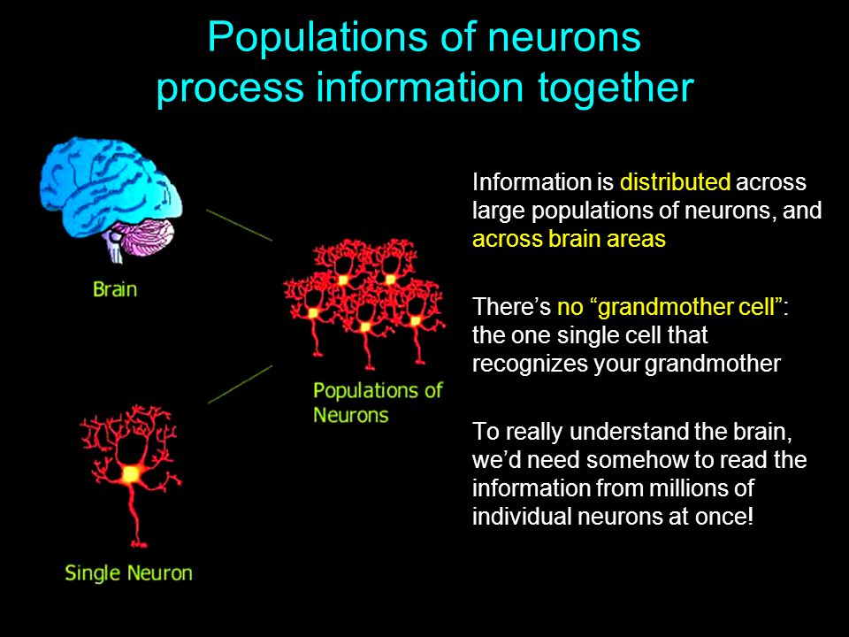 Populations of neurons process information together Information is distributed across large populations of neurons, and across brain areas There's no