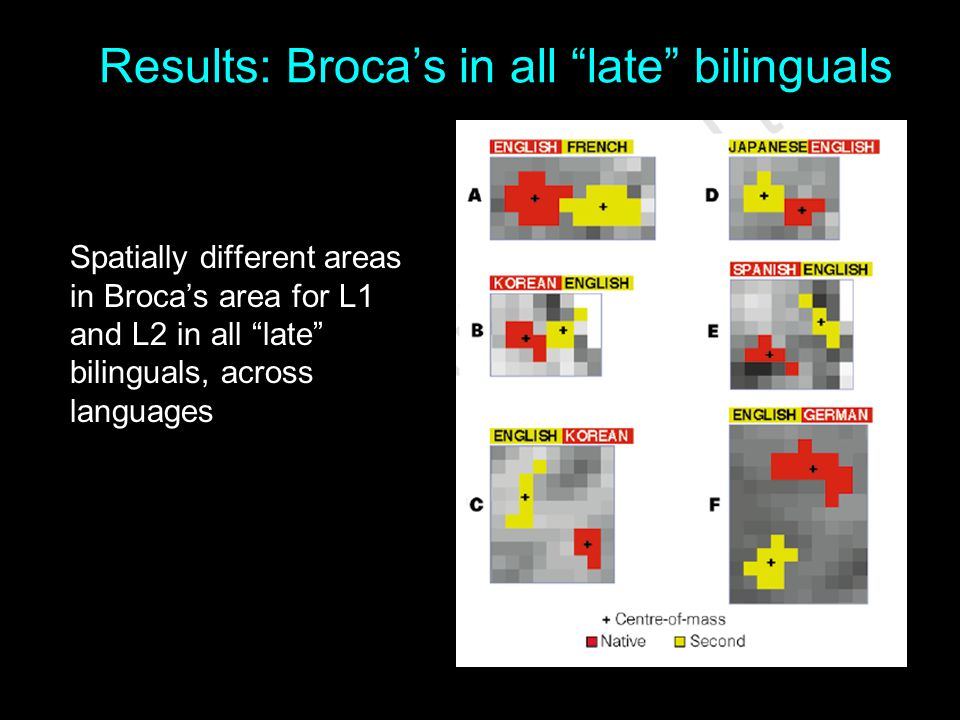 """Results: Broca's in all """"late"""" bilinguals Spatially different areas in Broca's area for L1 and L2 in all """"late"""" bilinguals, across languages"""