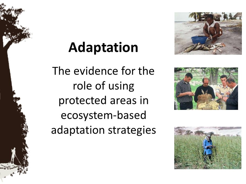 The challenge Ecosystem-based adaptation is the use of biodiversity and ecosystem services as part of adaptation strategies to help us cope with the adverse effects of climate change but The Millennium Ecosystem Assessment estimates that 60% of global ecosystem services are degraded and so these services are rapidly being lost