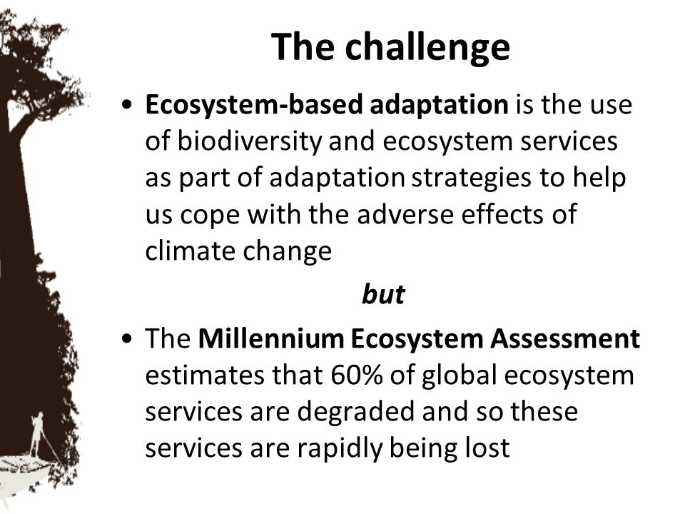 The impacts of degraded ecosystem services Health: spread of disease vectors, heat waves, poor sanitation due to lack of clean water Food: shortages and crop failure Water: shortages impacting drinking water, irrigation and hydropower potential 'Natural disasters': flooding, storms, drought, wildfire, pest infestations, ocean acidification