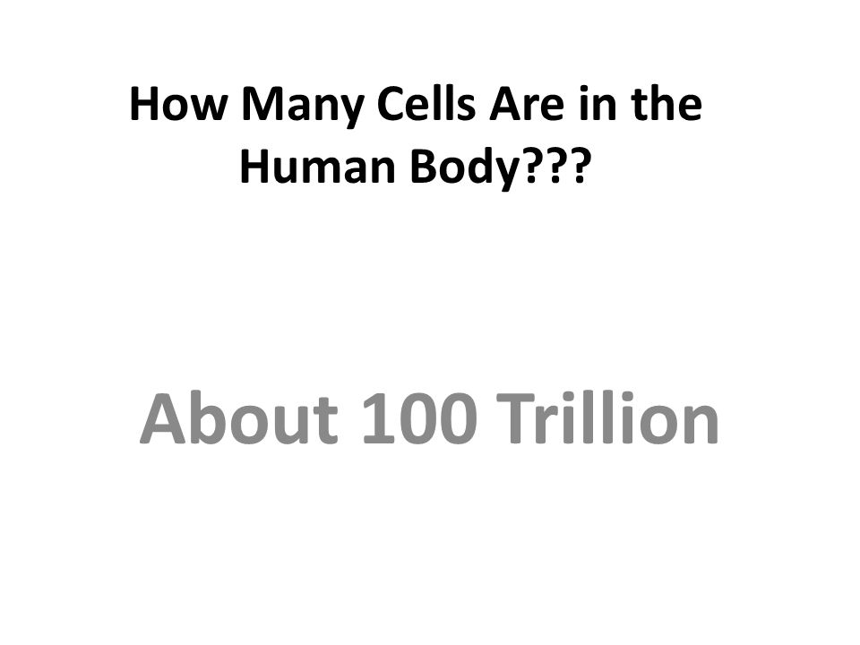 How Many Cells Are in the Human Body??? About 100 Trillion